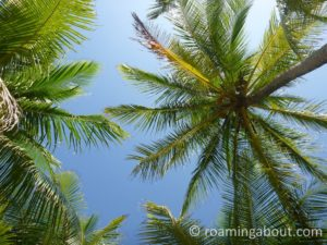 Yearning to be in the tropics again - yoga under the palm trees in Kuna Yala, Panama