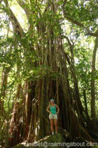 Tall tree in a Polynesian jungle
